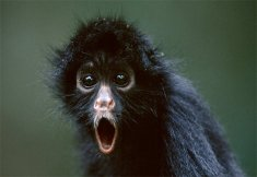 Φωτό 1 - Η Μαϊμού (από Desperado, 15/07/08)