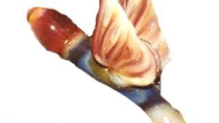 Υπτάμενος πόντσος (από Vrastaman, 26/08/08)