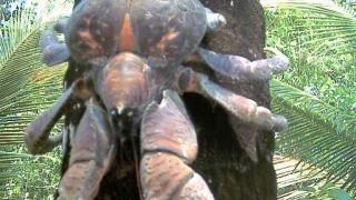 Καβουρογαμόσαυρος ο αναρριχόμενος... (από Vrastaman, 12/09/08)
