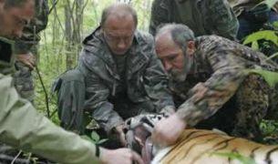 Η ρώσσικη αρκούδα κάνει πουτινιά και παγιδεύει την τίγρη (από GATZMAN, 12/09/08)
