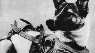 Η Λάικα - η σκυλίτσα αστροναύτης (από poniroskylo, 09/09/08)
