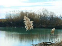 Λίμνη Τριχωνίδα, περιοχή μεγάλου φυσικού κάλους και τόπος μνήμης για τα θύματα των φανατικών τριχοφοβικών (από xalikoutis, 21/10/08)