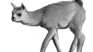 μορφή της ασθένειας σε χαριτωμένο χορτοφάγο θηλαστικό (από xalikoutis, 21/10/08)
