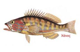 Χάνος - το ψάρι (από poniroskylo, 13/01/09)