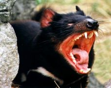 Άγριο ζούδι, που προκαλεί τρόμο (από krepsinis, 05/02/09)