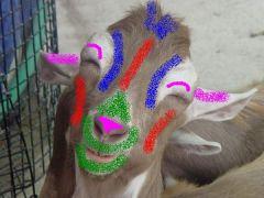 Το ίδιο κατσίκι στο παρδαλό του. (από Galadriel, 21/02/09)