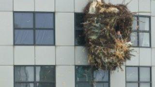 Φωλιά χρηματιστηριακής εταιρίας και χεσμένη... (από krepsinis, 12/02/09)