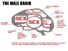Μπλοκ διάγραμμα αντρικού εγκέφαλου (από GATZMAN, 23/03/09)
