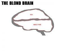 Κλείνουμε με το μπλόκ διάγραμμα του εγκέφαλου της ξανθιάς. Ειδική κατηγορία (από GATZMAN, 23/03/09)