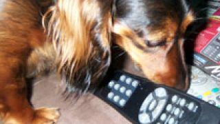 Πουτσίλα μυρίζει... Πάλι καλά που δεν το είχε βάλει στον κώλο του, ο τηλεμαστούρης... (από Marco De Sade, 25/03/09)