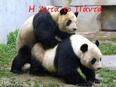 Anda does Panda (από Vrastaman, 15/03/09)