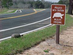 H εκτροπη της α-χελώνας (από Vrastaman, 10/03/09)