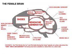 Μπλόκ διάγραμμα γυναικείου εγκέφαλου (από GATZMAN, 23/03/09)