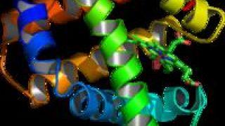 Μορφή πρωτεϊνης (από GATZMAN, 27/04/09)