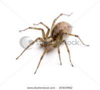 Αράχνη με αράχνη (από poniroskylo, 28/05/09)