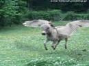 Πετάει ο γάιδαρος! (Φωτό από Μπούμπη). (από Khan, 10/08/09)