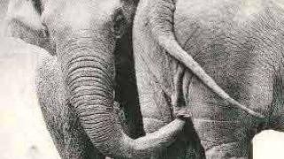 με σήμα το ελεφαντάκι... (από BuBis, 22/09/09)