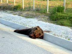 Συνέβη στην Εγνατία οδό (από GATZMAN, 25/10/09)