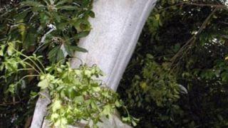 jony μαυρε το ζωγραφιστι 10 το σκαλιστο ποσο βρε ???? χα χα χα (από ο αυτοκτονημενος, 15/11/09)
