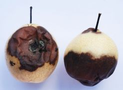 η σωστή σειρά είναι: μαραίνονται, ψοφάν, σαπίζουν... (από BuBis, 10/11/09)
