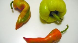 Ρε την καημένη την πιπεριά... (από Pirate Jenny, 16/02/10)