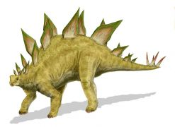 Stegosaurus από την ιουράσια περίοδος: 199 ως  145 εκατομμύρια  χρόνια πριν. (από tryager, 23/07/10)