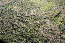 φυτεία στην Πάρνηθα, όπως την είδε το μπατσόπτερο (από Pirate Jenny, 22/11/10)