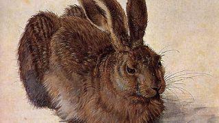 λαγός από το χέρι του Albrecht Dürer (από sstteffannoss, 25/01/11)
