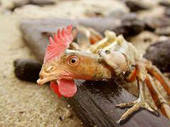 Once a crab, always a crab! (από Vrastaman, 17/02/11)