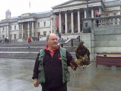 Εκπαιδευμένο γεράκι στην πλατεία Τραφάλγκαρ (από poniroskylo, 04/03/11)