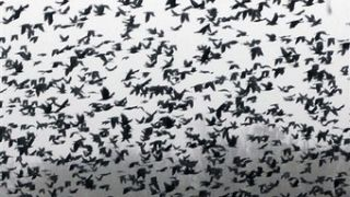 """A murder of crows"" (από Pirate Jenny, 02/05/12)"