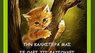 Καλησπεράκιας- γατάκι (από Khan, 01/03/14)