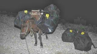 Αναπαράσταση μουλαριού που μεταφέρει ναρκωτικά (τσιμπημένη από ρατσιστικό άρθρο κατά Αλβανών).  (από Khan, 21/10/14)