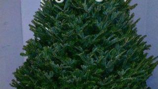 Δέντρο Κυριάκος Μητσοτάκης. (από Khan, 24/12/14)