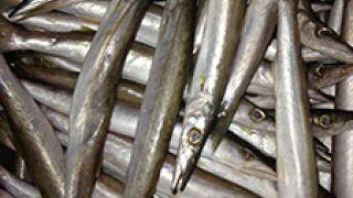 ψαροκασέλα με λούτσους