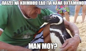 Πιγκουίνος διανύει κάθε χρόνο 8000χλμ για να βρει στη Βραζιλία τον ψαρά που τον έσωσε